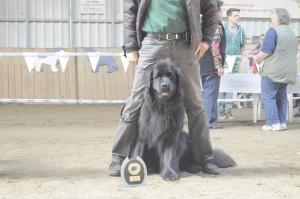 Dakotah Schönster Hund der Ausstellung NLC Thüringenschau 2014