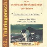 Dakotah NLC Thüringenschau Schönster Neufundländer
