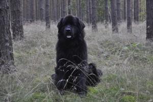 Dakotah from Blair Witch Garden Wald